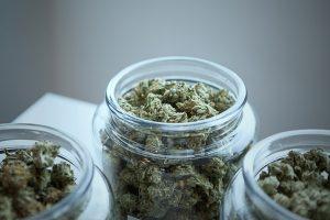 Michigan Cannabis Industry